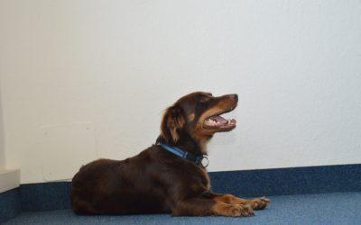 Unser Bürohund